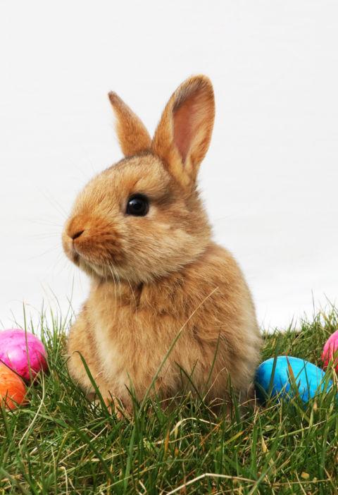 Easter Program and Information in Toledo